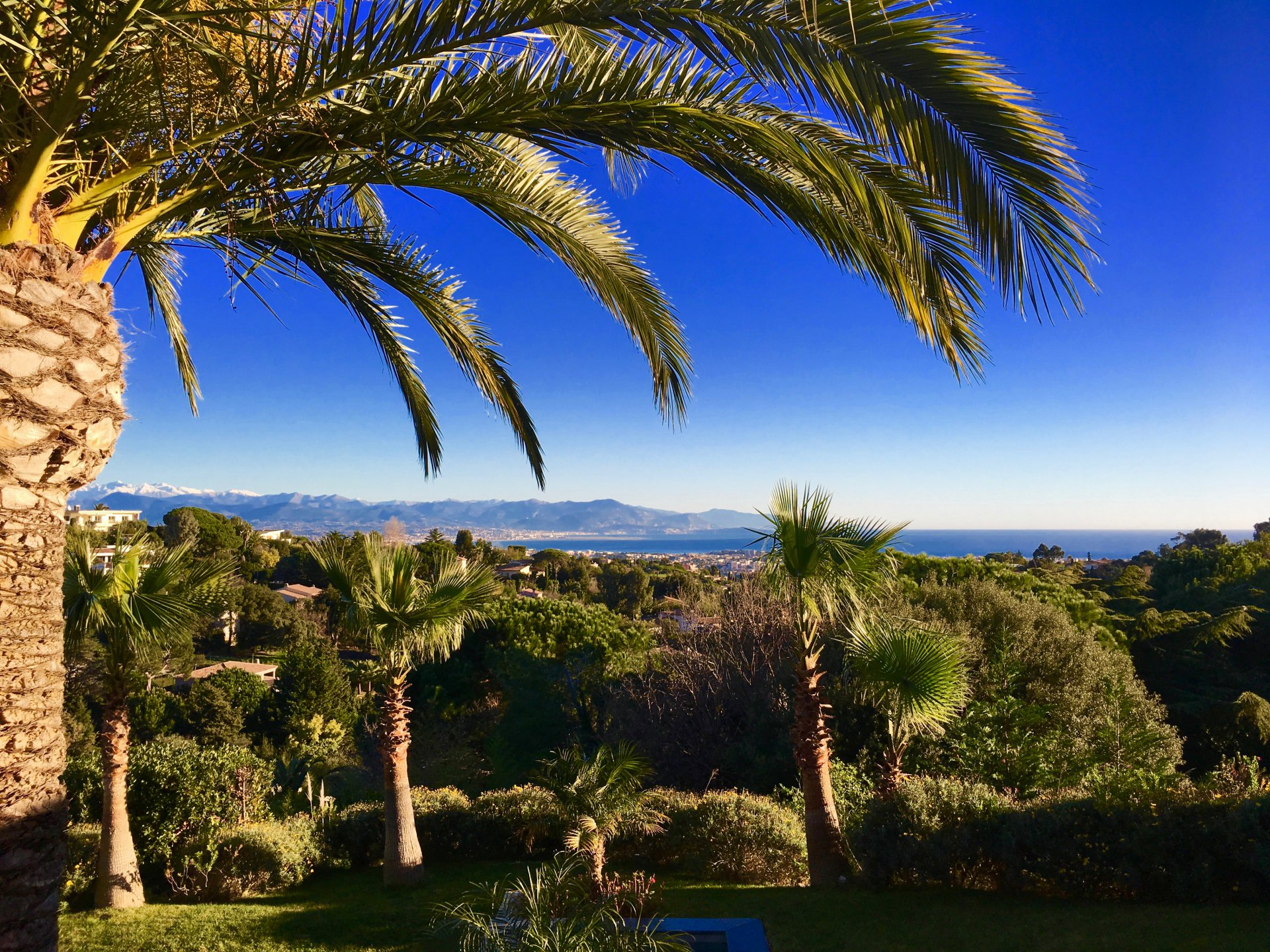 CALIFORNIE - PALM TREES, SEA AND SNOW-CAPPED MOUNTAINS