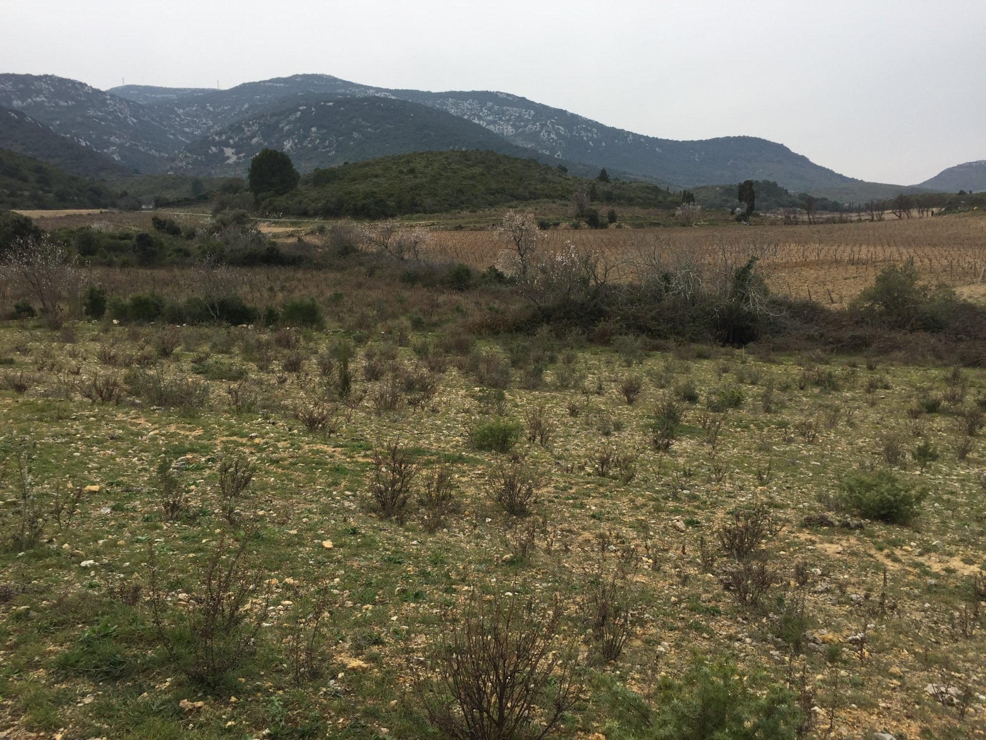 Sale Not constructible land - Feuilla