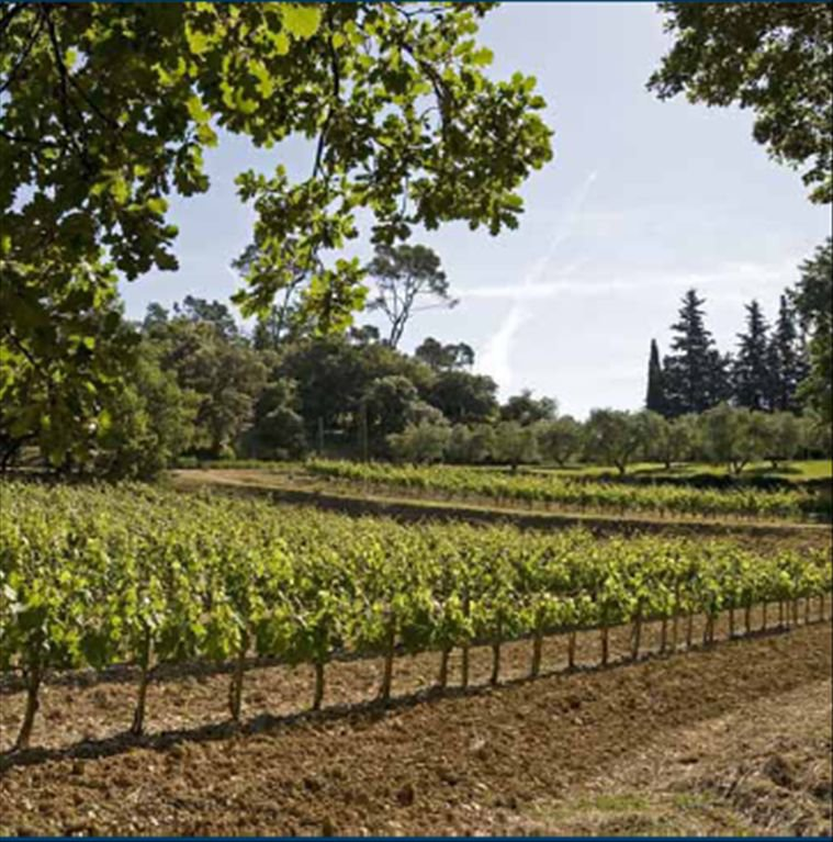 For sale - Vineyard domain in Var