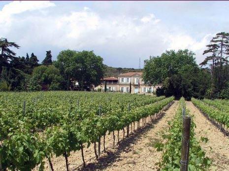 Vigneyard with castleof XIX century
