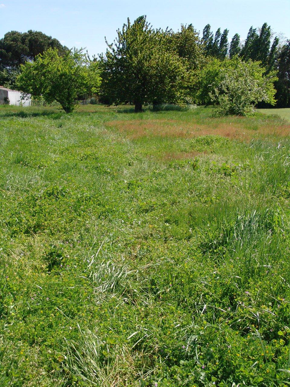 Vente terrain cozes 55 000 for Vente terrain