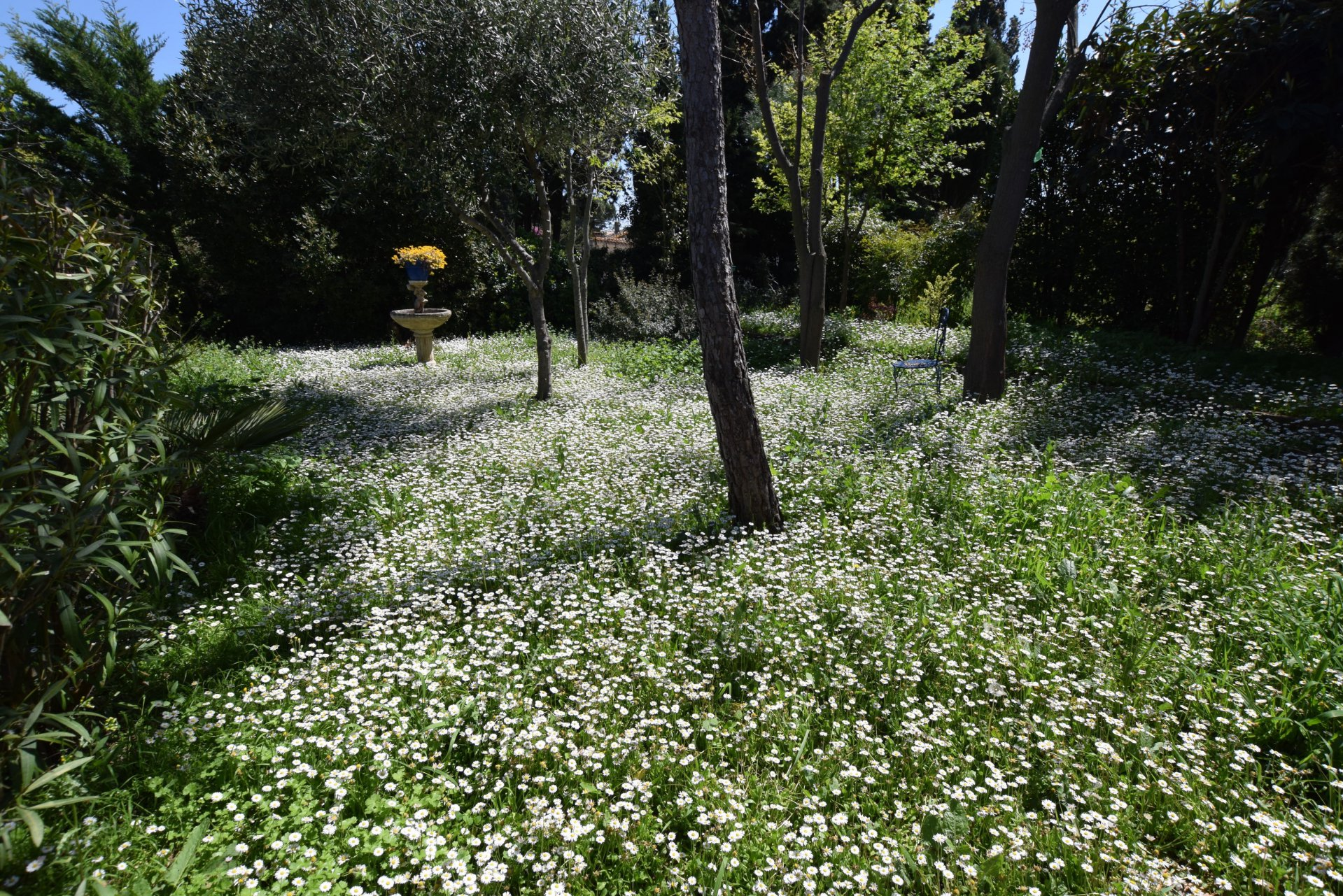 Maison de plain pied avec jolie jardin
