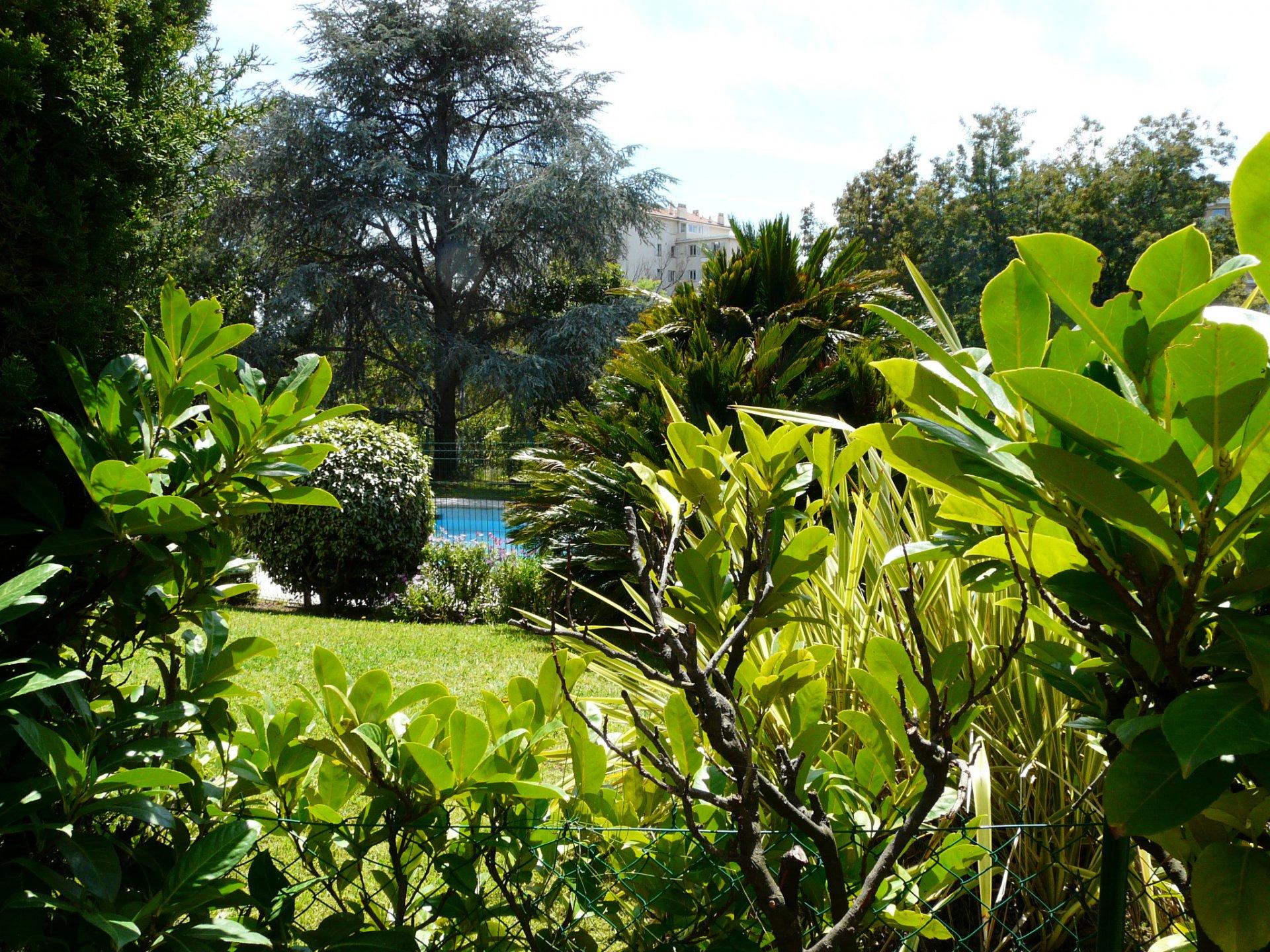 garden next to the swimming pool
