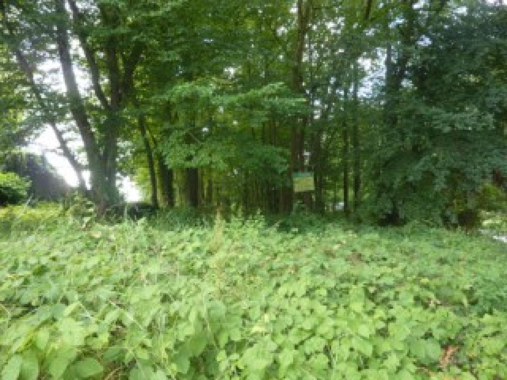 Sale Plot of land - Chateau La Valliere