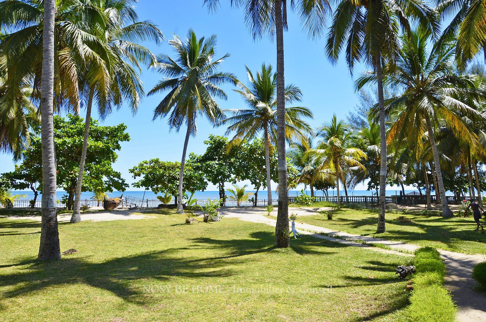 Cocoteraie sur plage