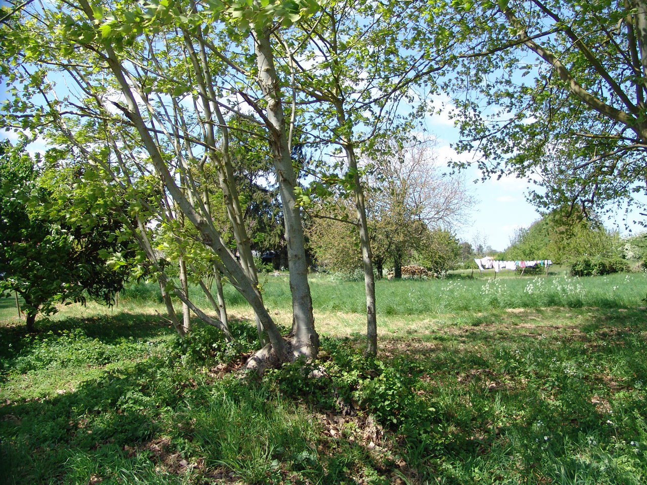 Sale Building land - Meursac