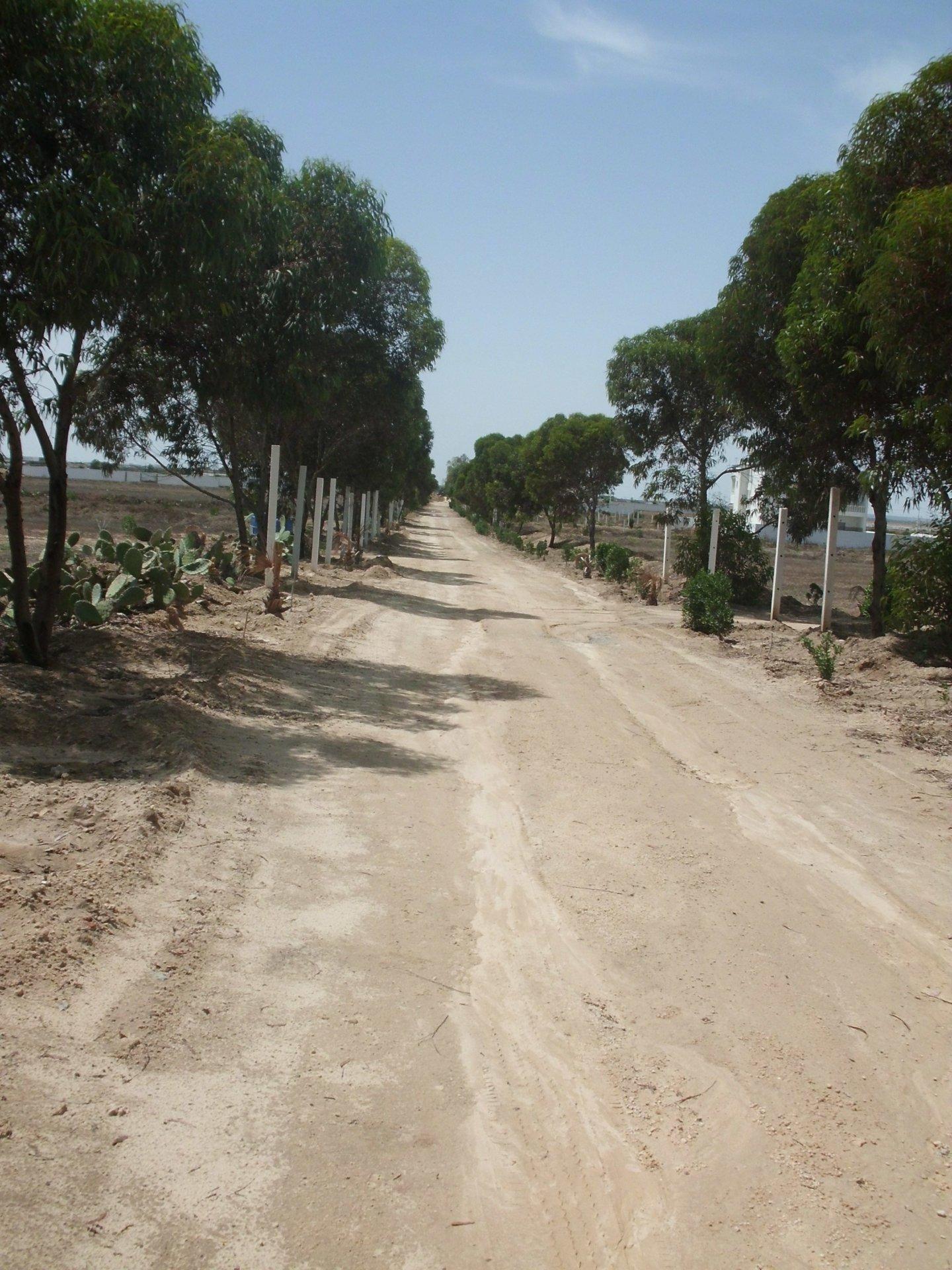 Vente Terrain - Hergla - Tunisie