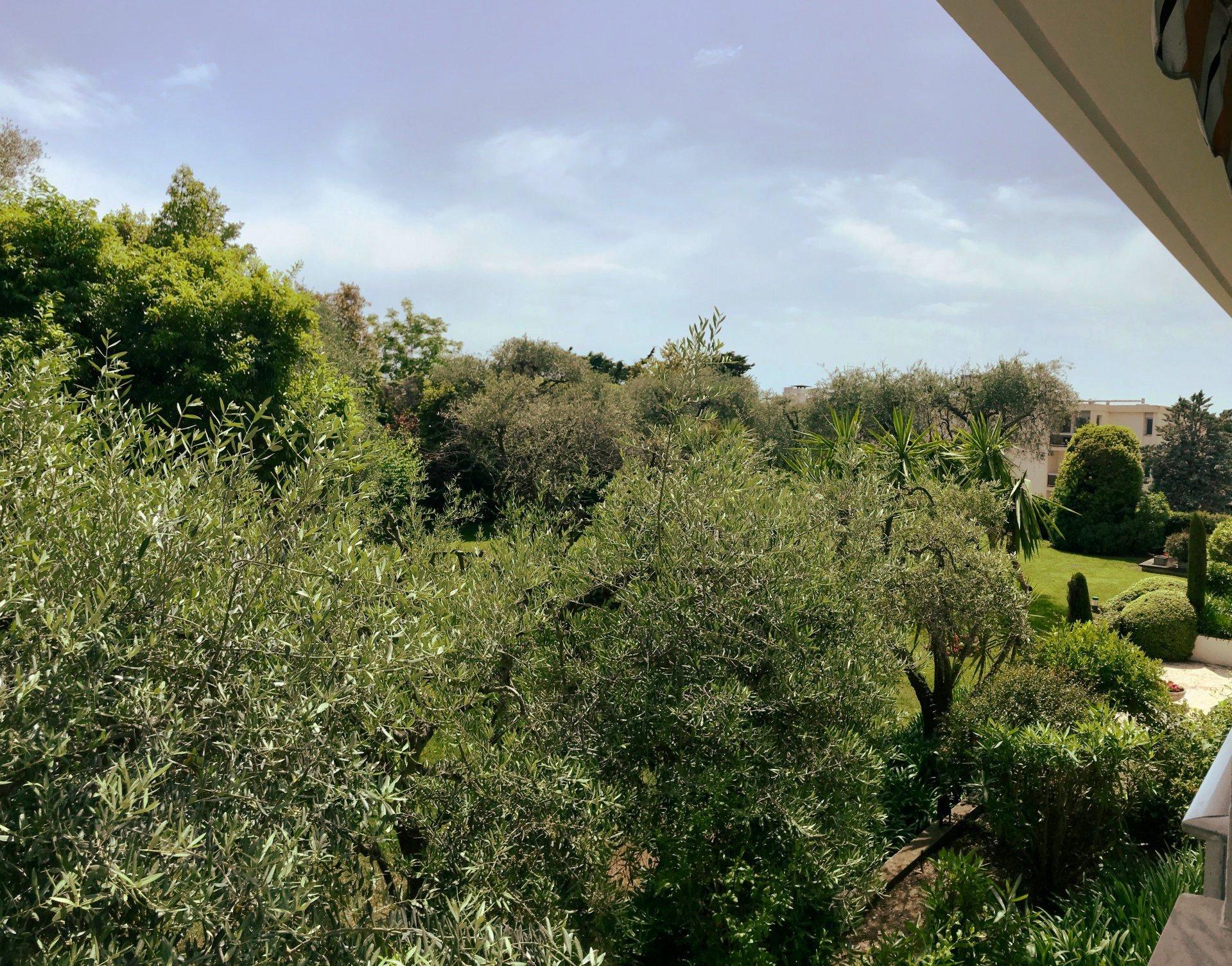 garden quiet view