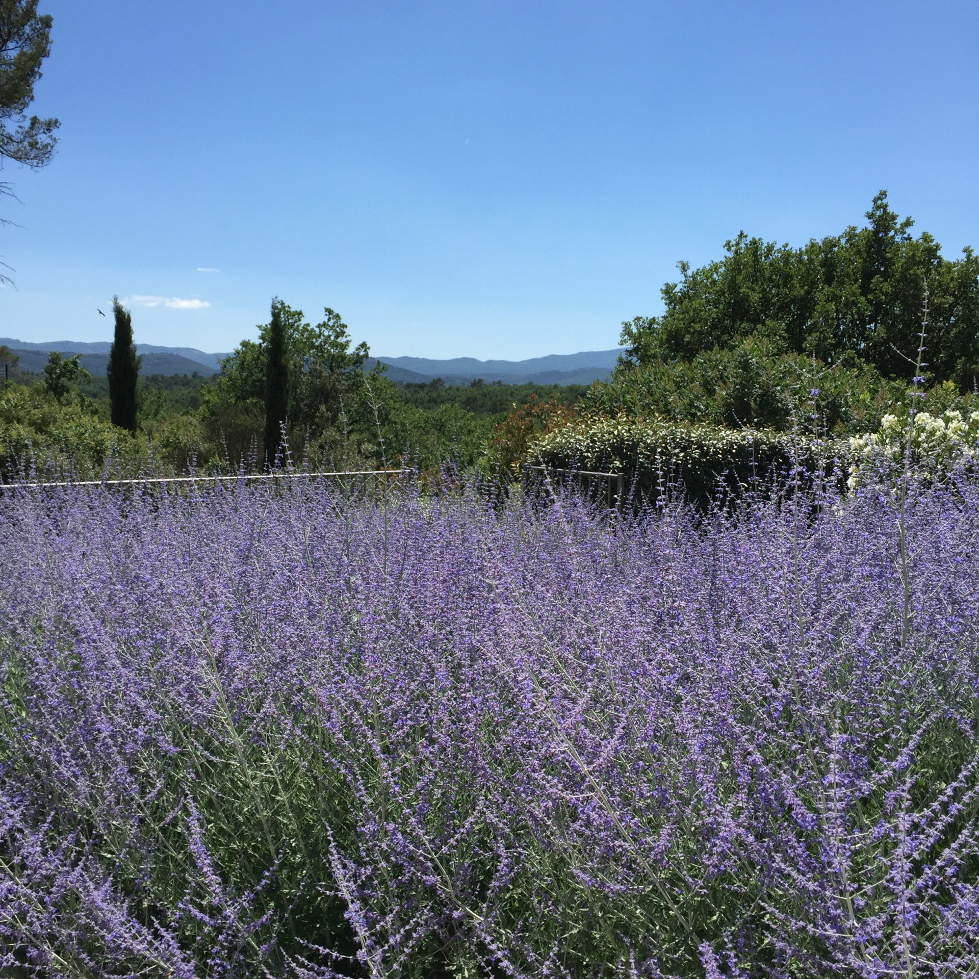 Exceptional guest house in Provence