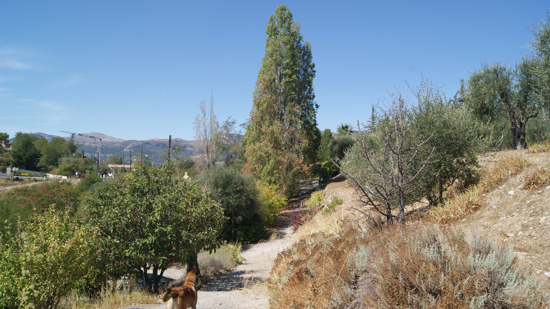 Villa a Bellet  avec 6 acres de terrain
