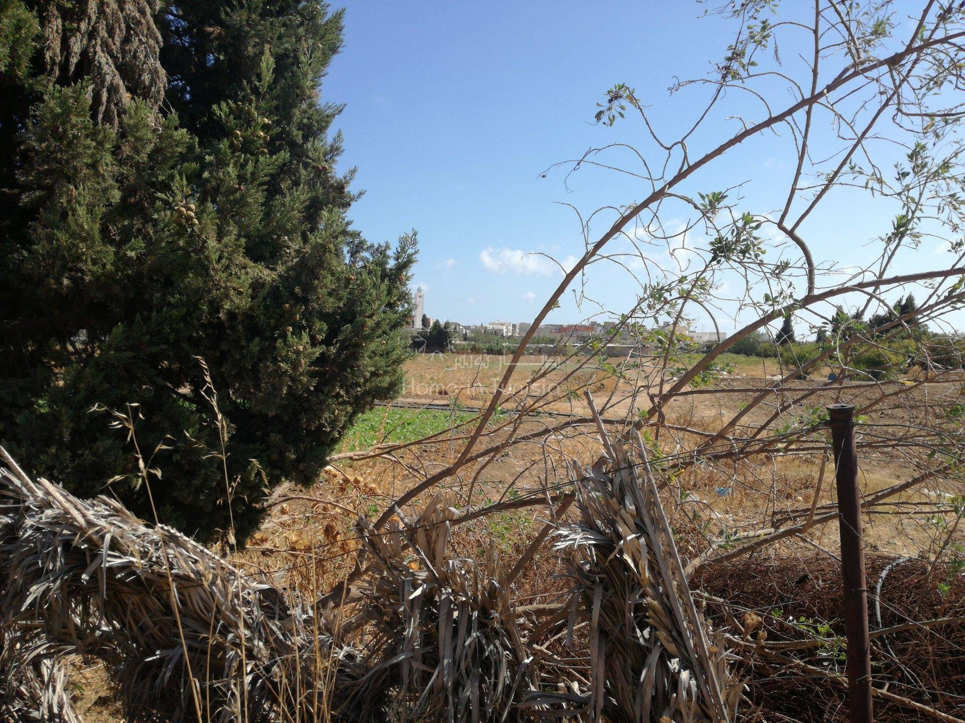 Terrain agricole de 24353