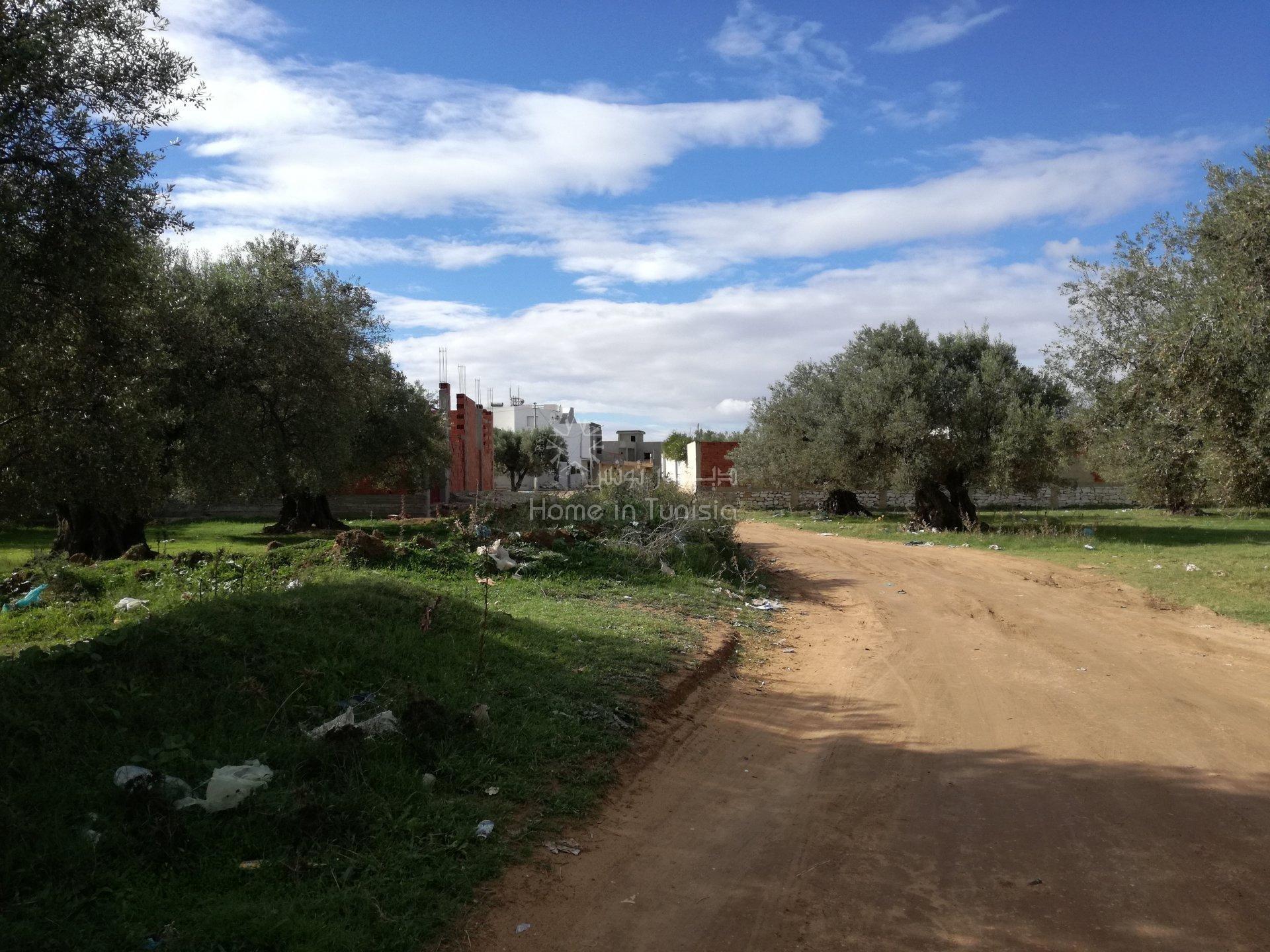 Sale Plot of land - El Borjine - Tunisia