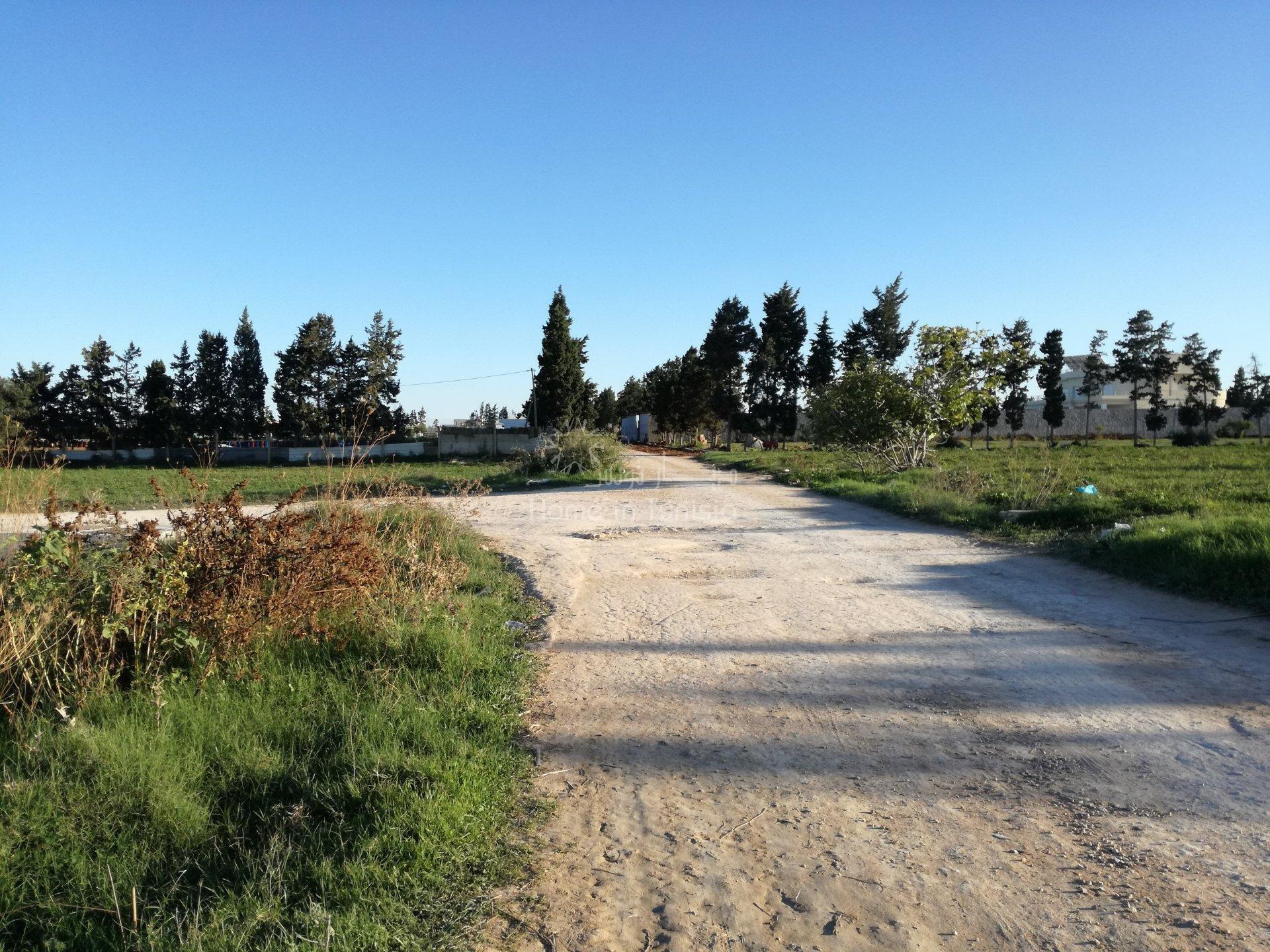 terrain agricole
