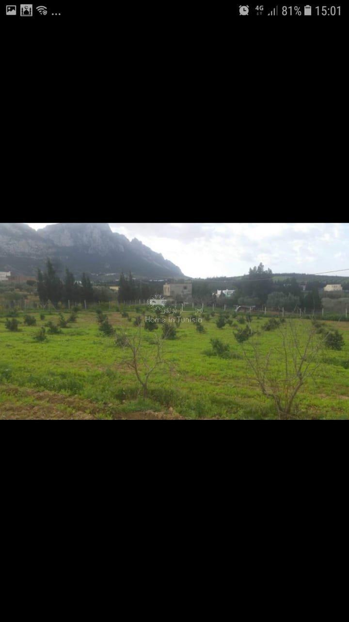 Ferme et exploitation agricole Mornag