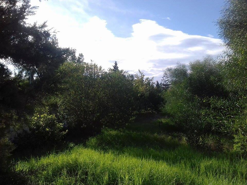 Terrain exceptionnel  à La Soukra