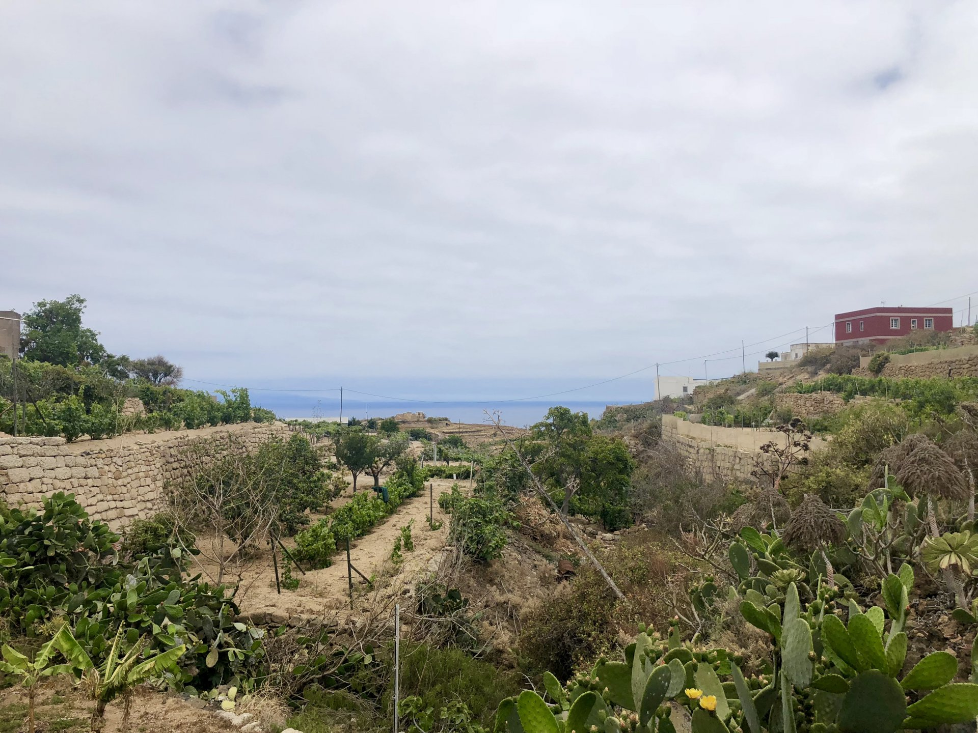 Finca situated between the sea and the mountains in El Escobonal