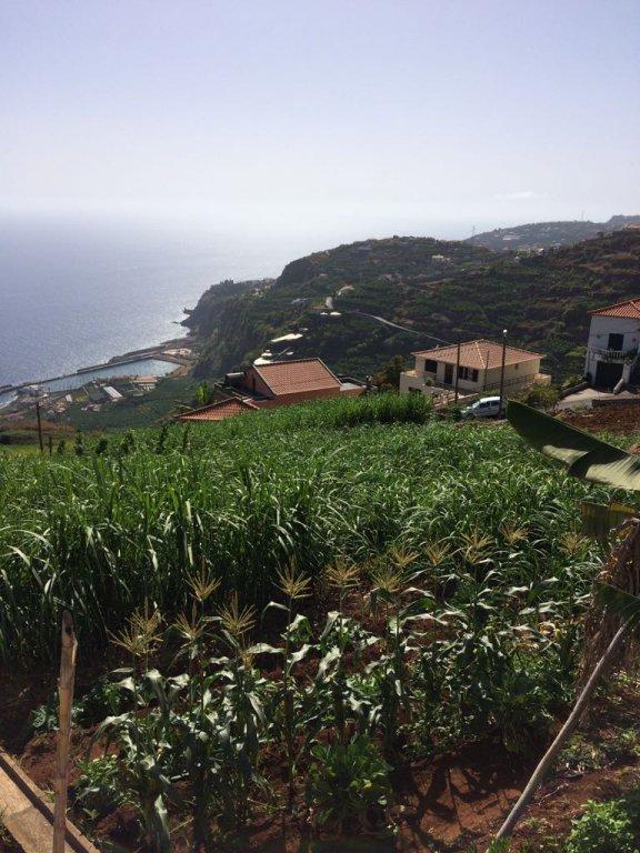 Terrain constructible de 1310 m2 avec Vue Splendide sur L'Océan – Ribeira Brava