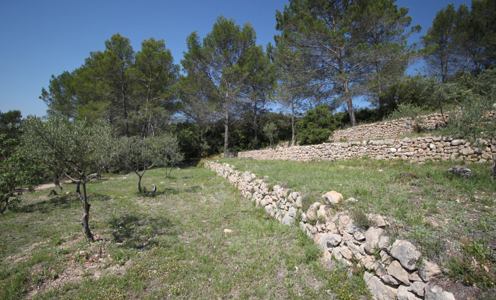 Terraces with olive trees