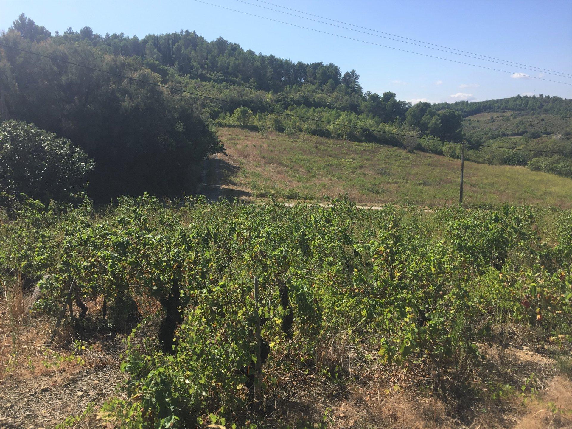 Maison ancienne avec jardin et parcelle de vignes