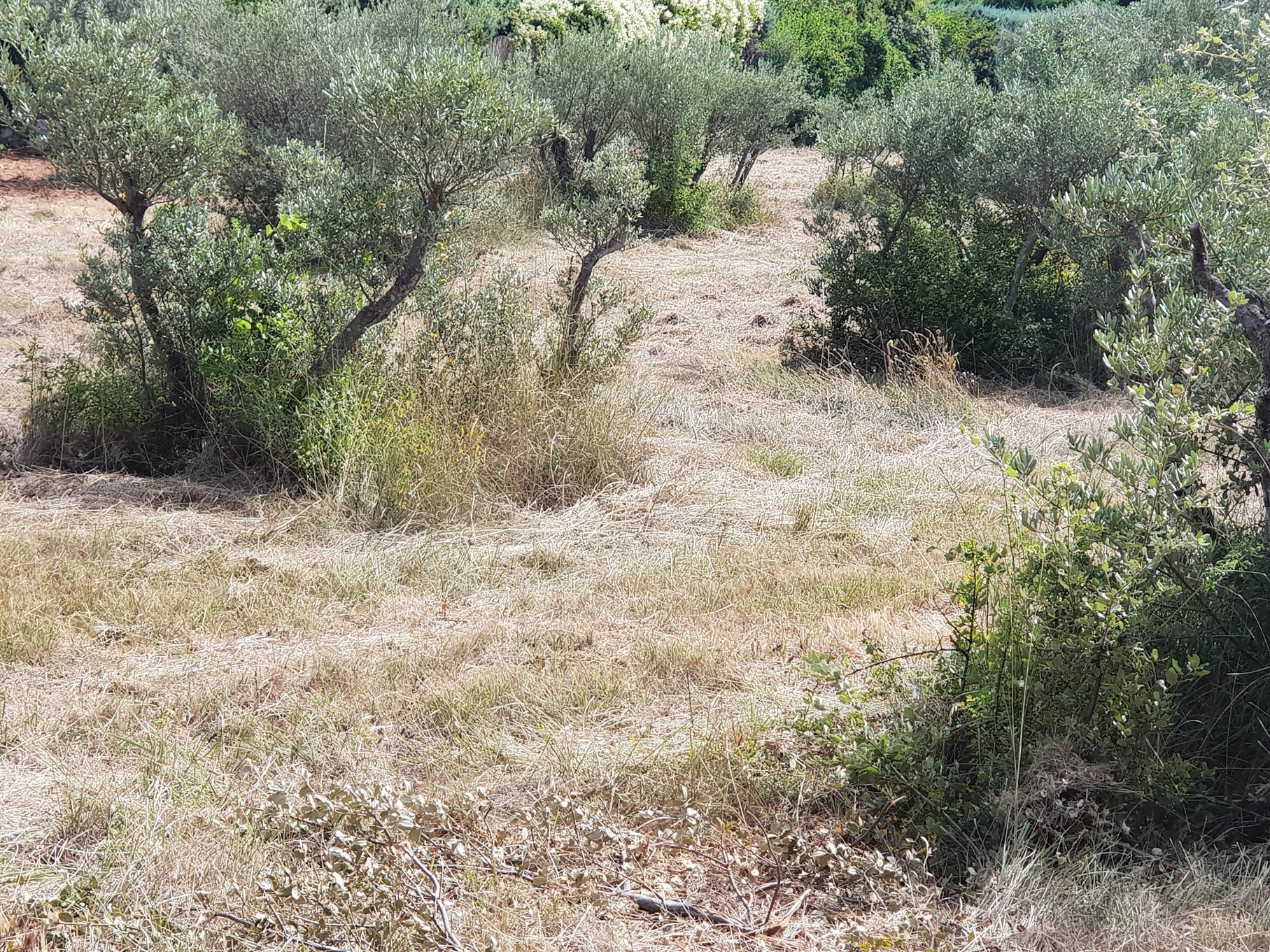 NICE flat land in Aups 6153 m² in Aups