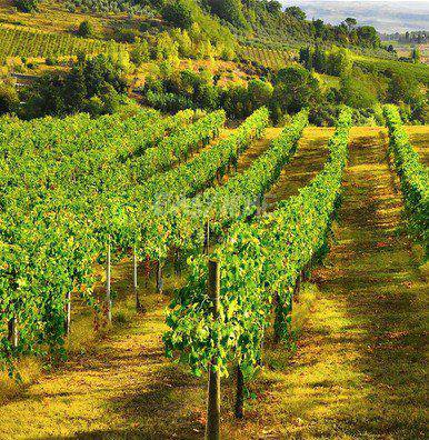 Verkauf Weingut - Draguignan