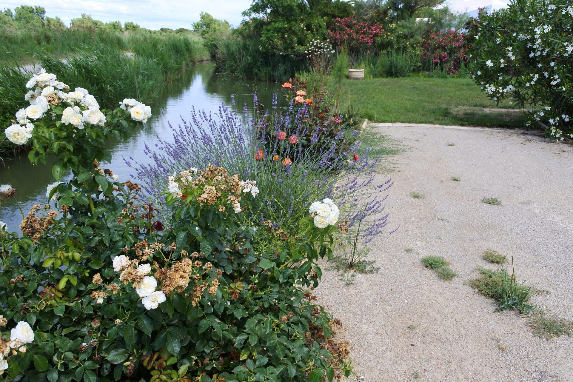 Maisonnette au bord de l'étang