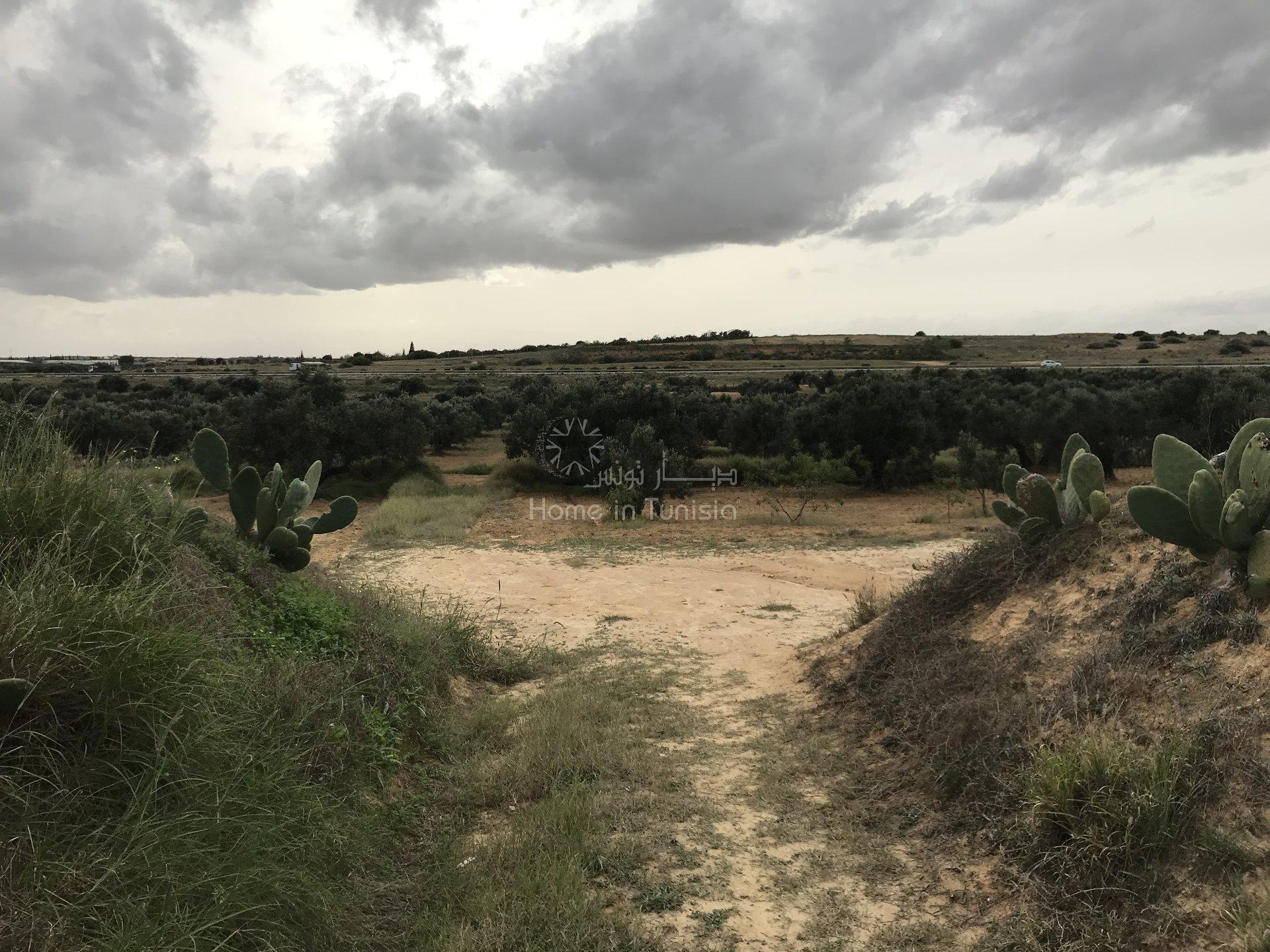 Terrain sur l'autoroute kalaa kebira tunis