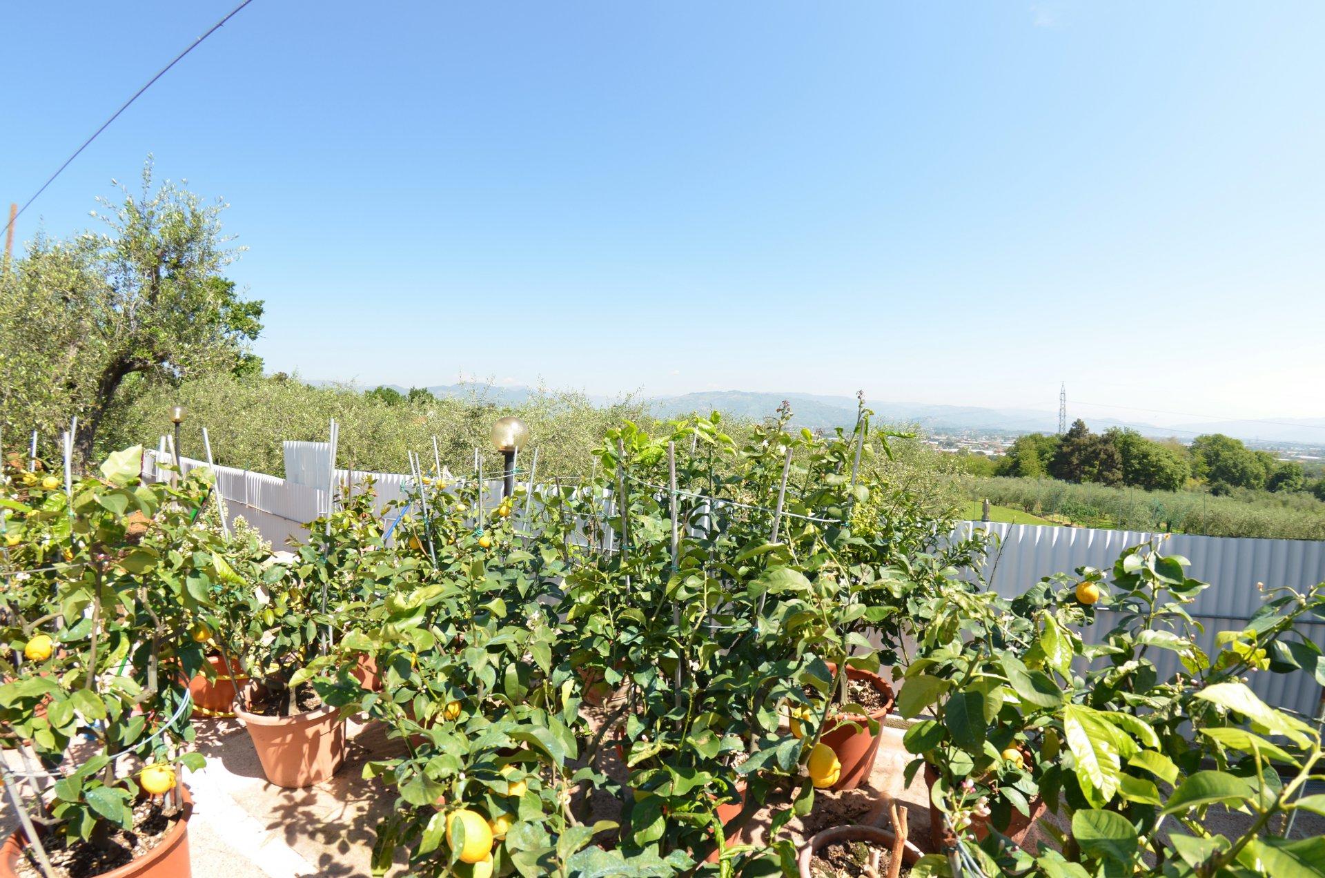 ITALIE, TOSCANE, GÎTE AVEC PISCINE, 6 PERSONNES, LUCCA