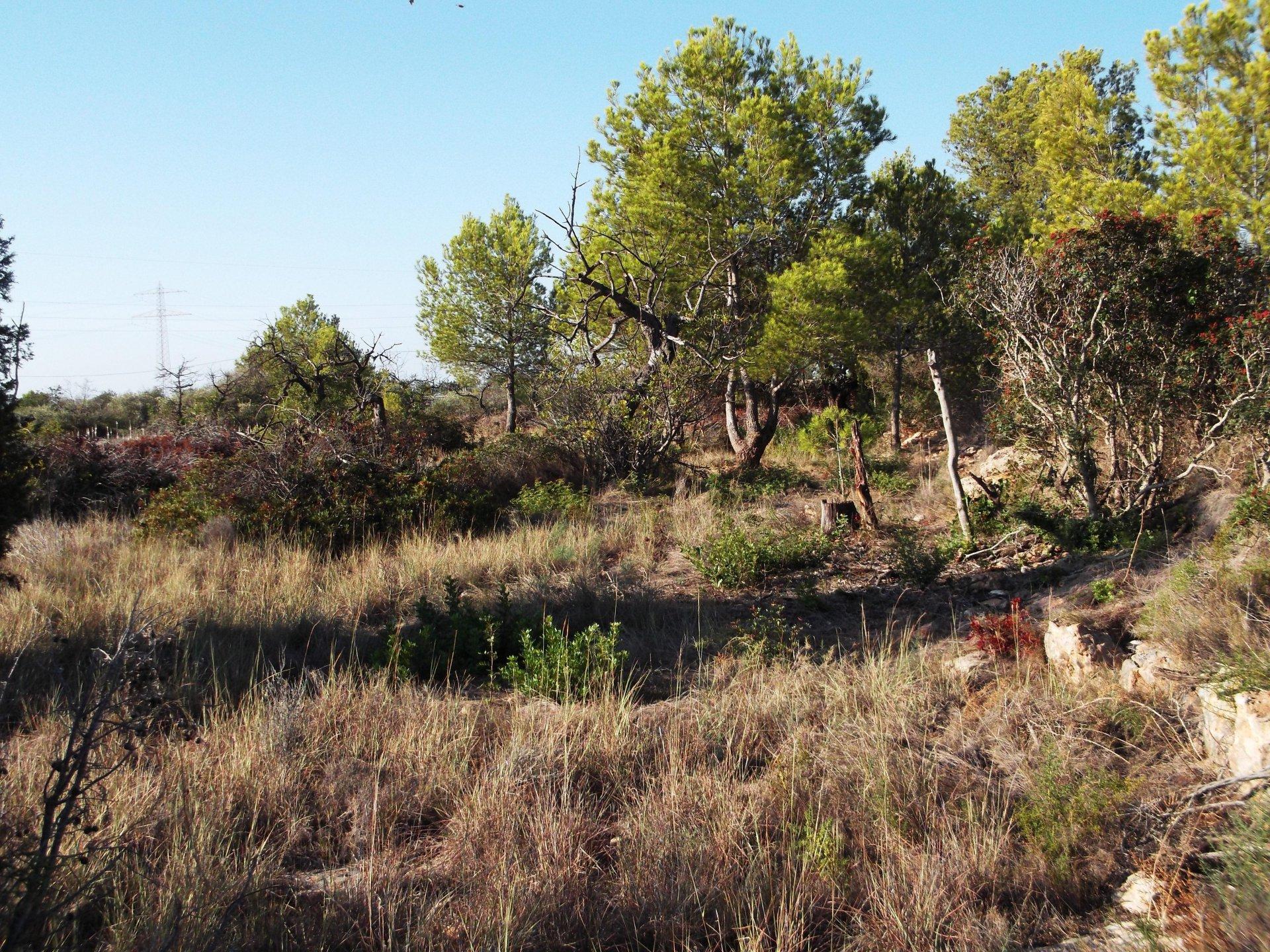Terrain emplacement pour camping car
