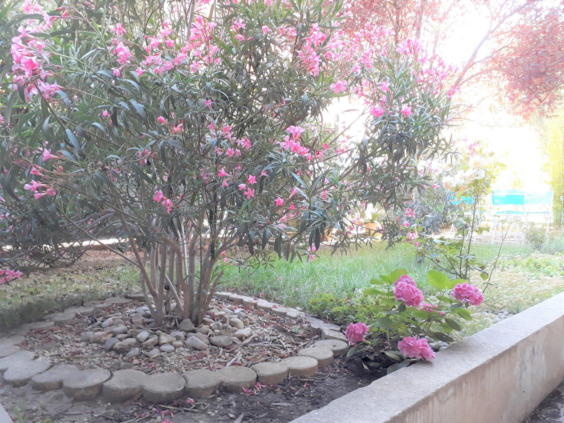 Magnifique jardin arboré et fleuri