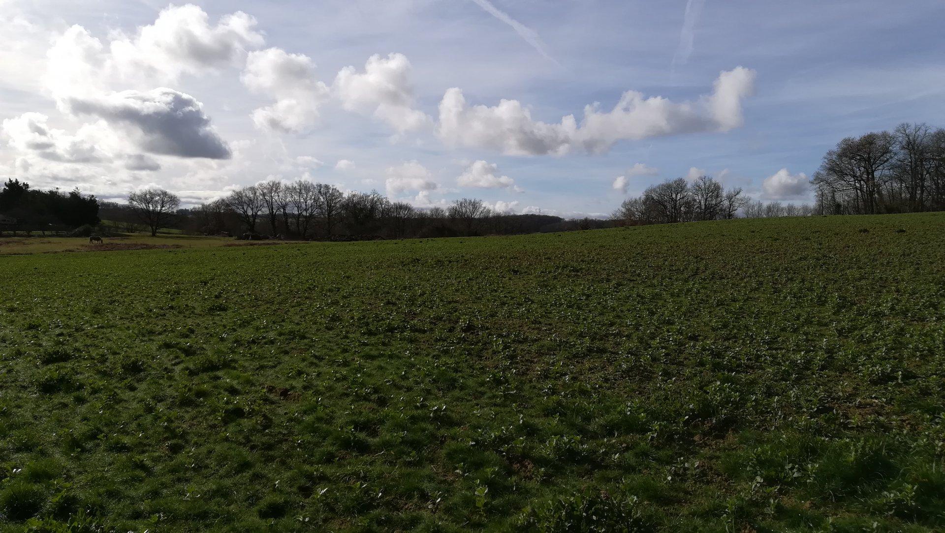 Bouwterrein van 1.4ha met 2x woonvergunning in de Gers