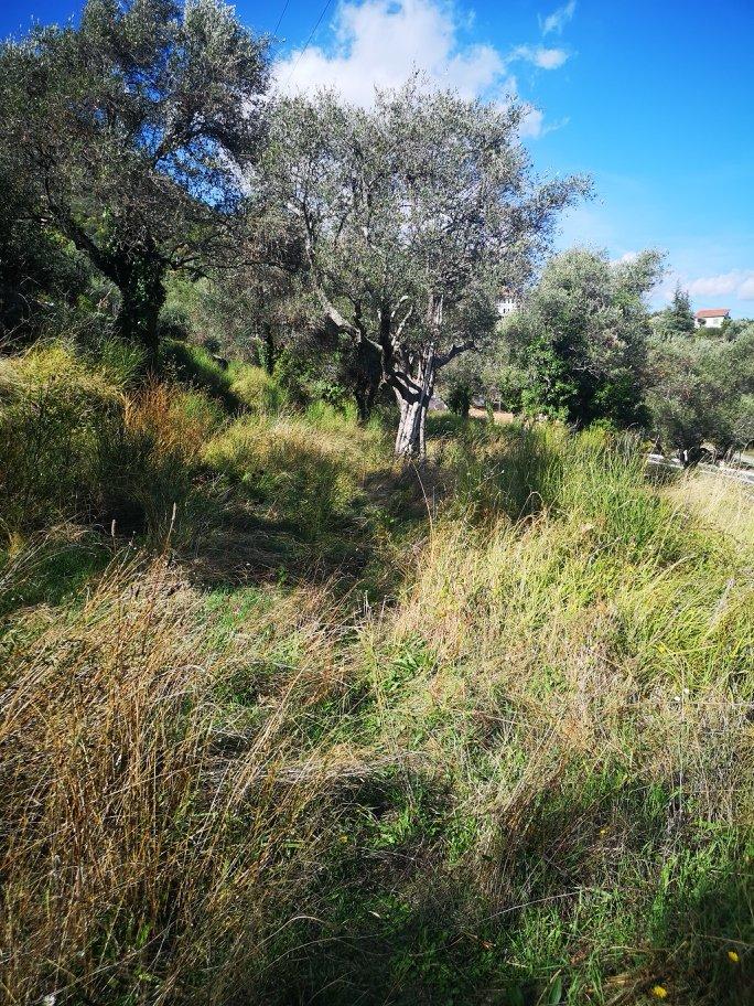 CHATEAUNEUF VILLEVIEILLE : Très beaux terrains plats, ...