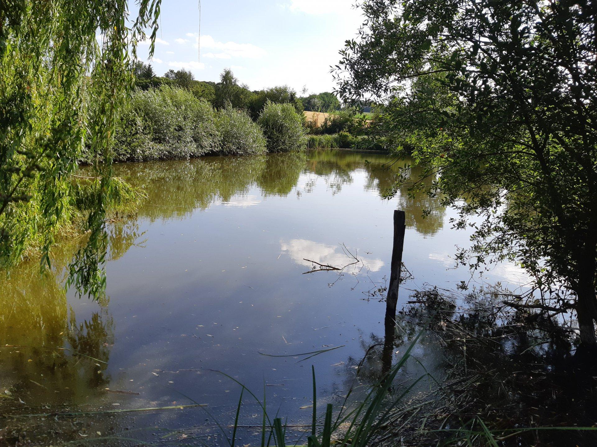 Terrain avec plan d'eau entre Belleme et Nogent le Rotrou