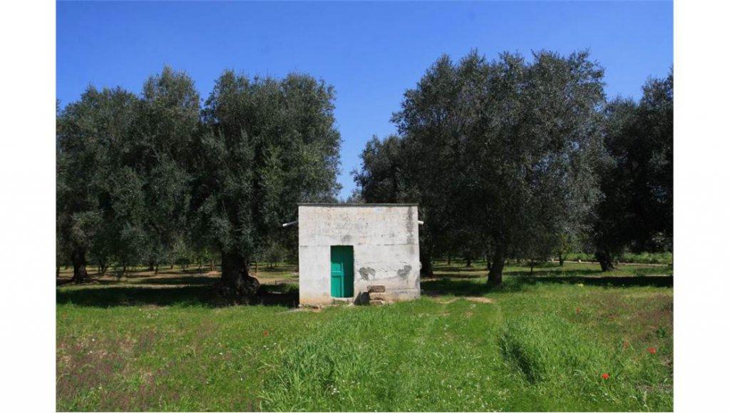 Vendita Rustico/Casale - Oria - Italia