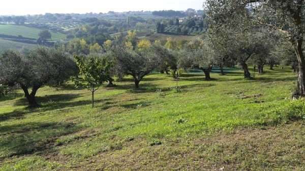Sale Plot of land - Cepagatti - Italy