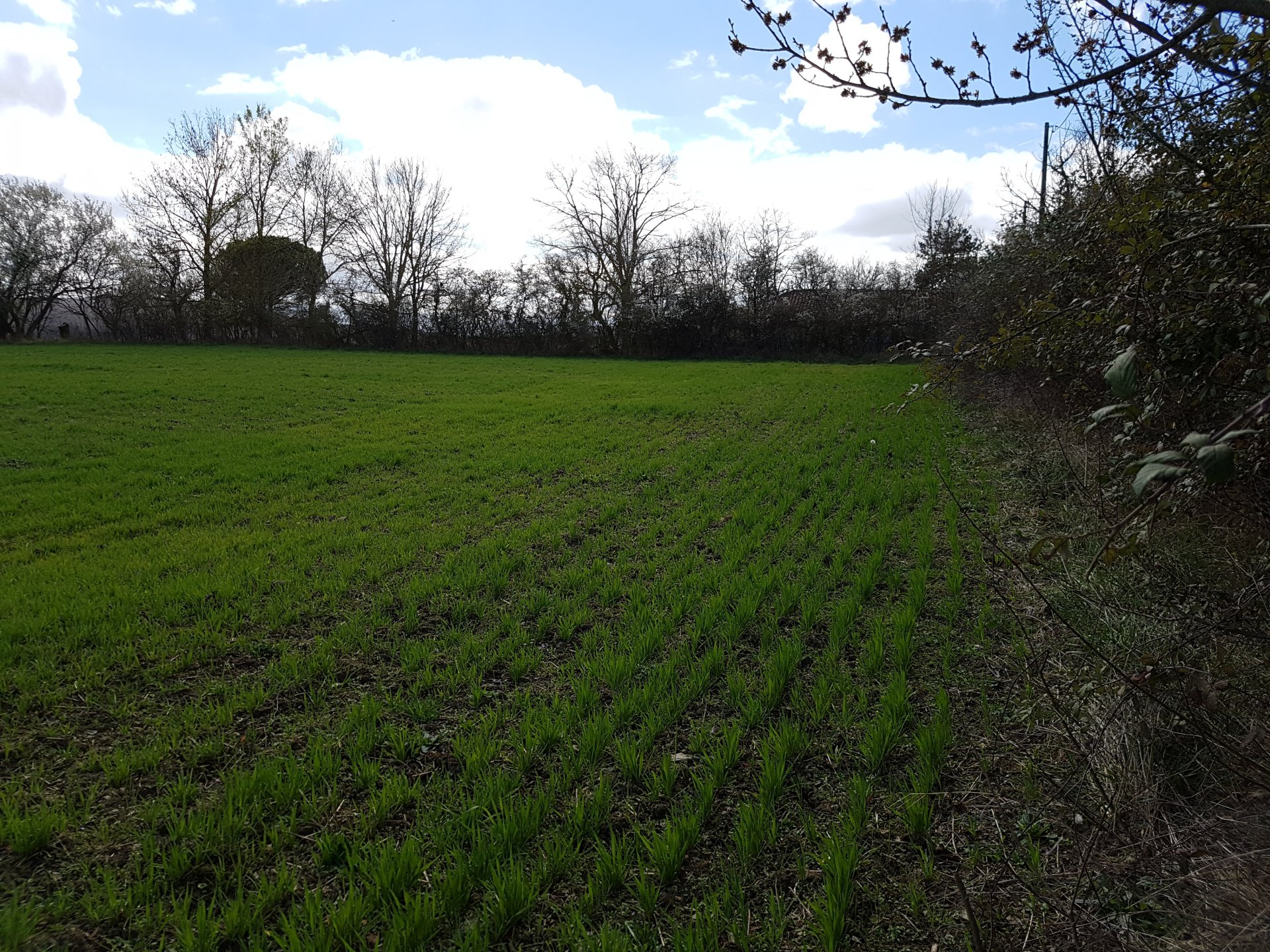 In Boussan, building plot of 2500 m² with superb Pyrenees views