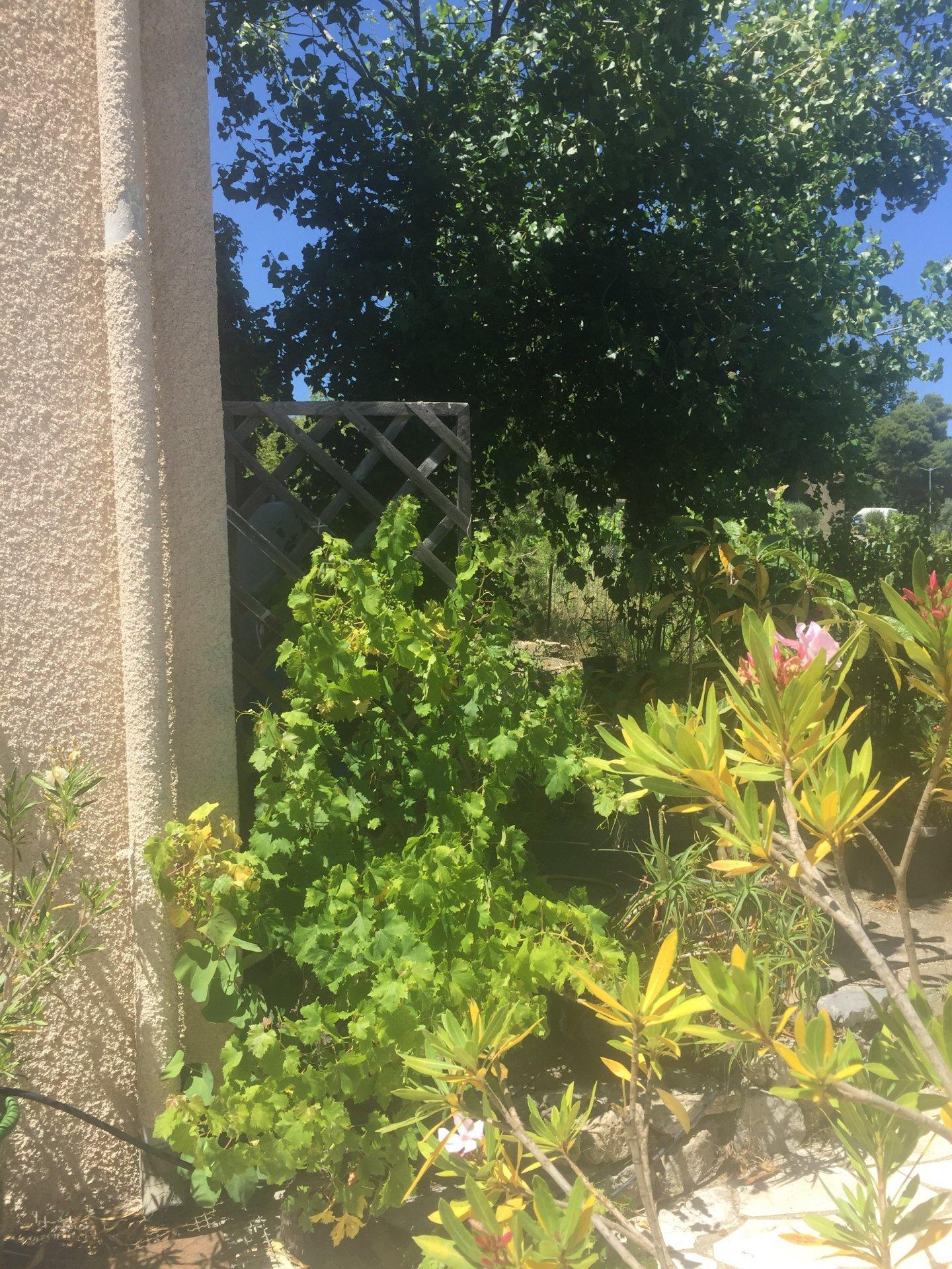 Sale House - Durban-Corbières