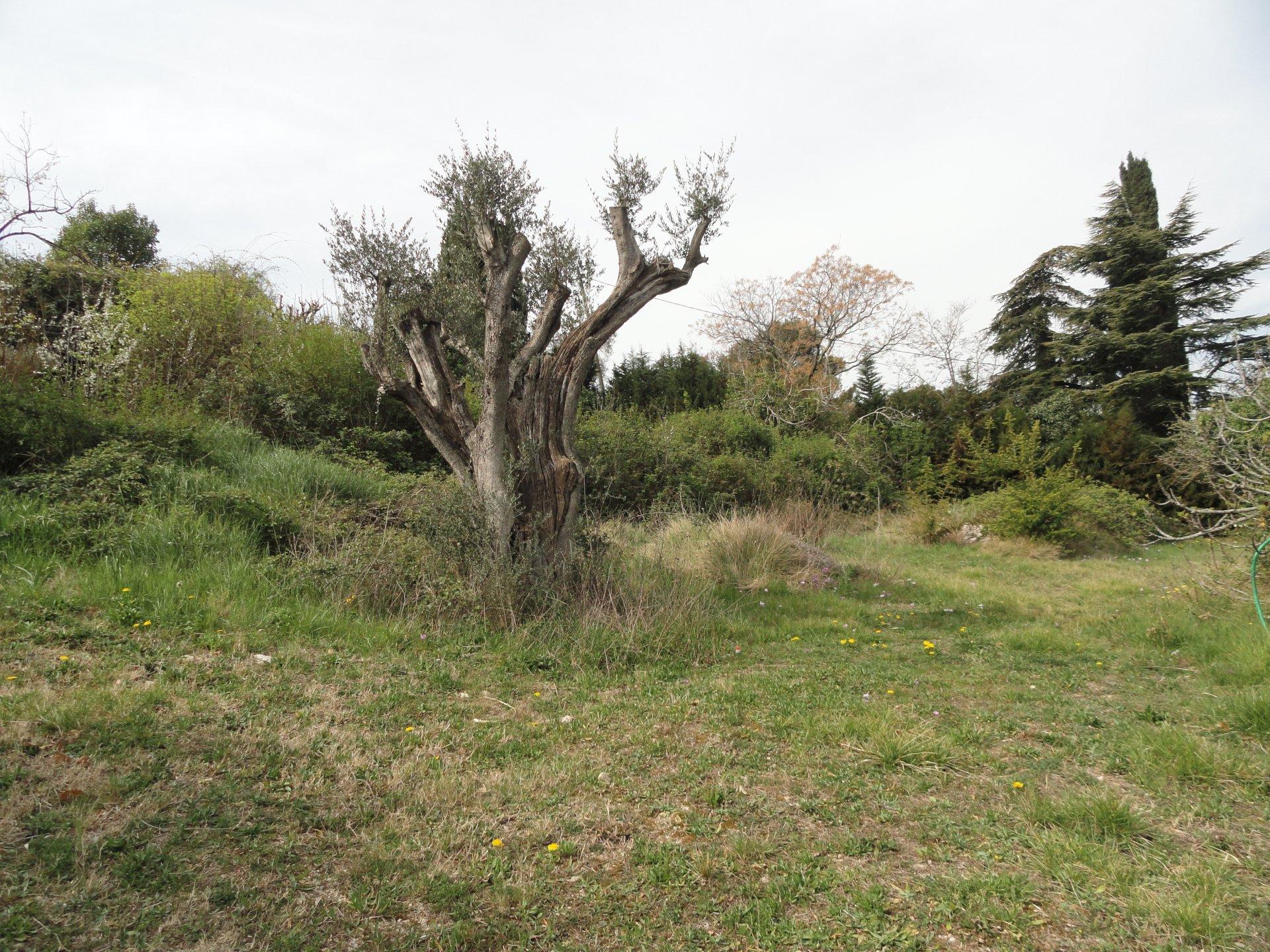 Vendita Terreno edificabile - Mougins