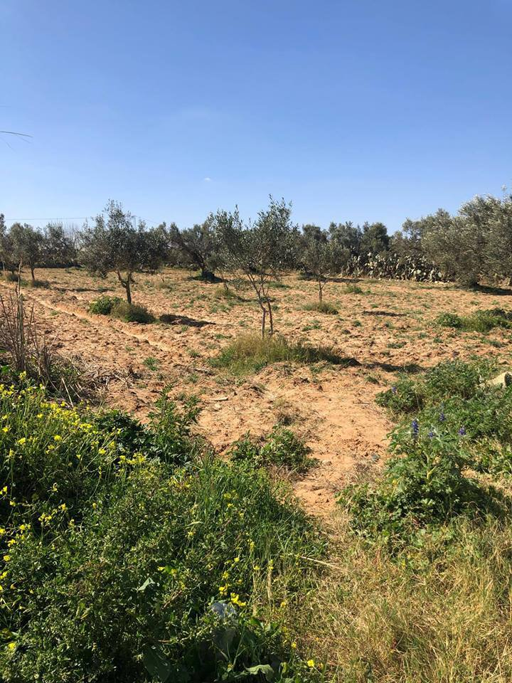 Verkauf Grundstück - Bekalta - Tunesien