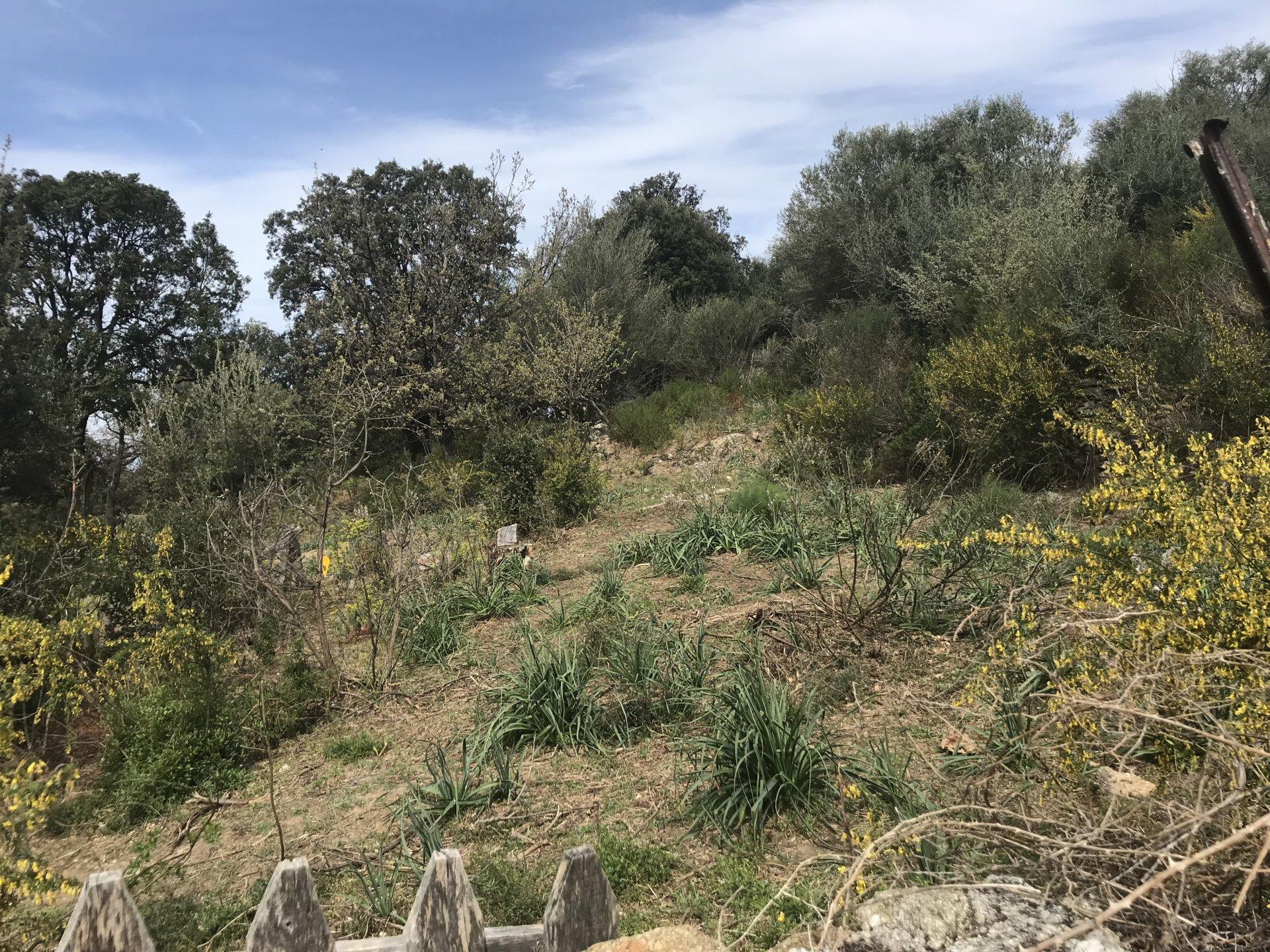 Sale Building land - Calenzana