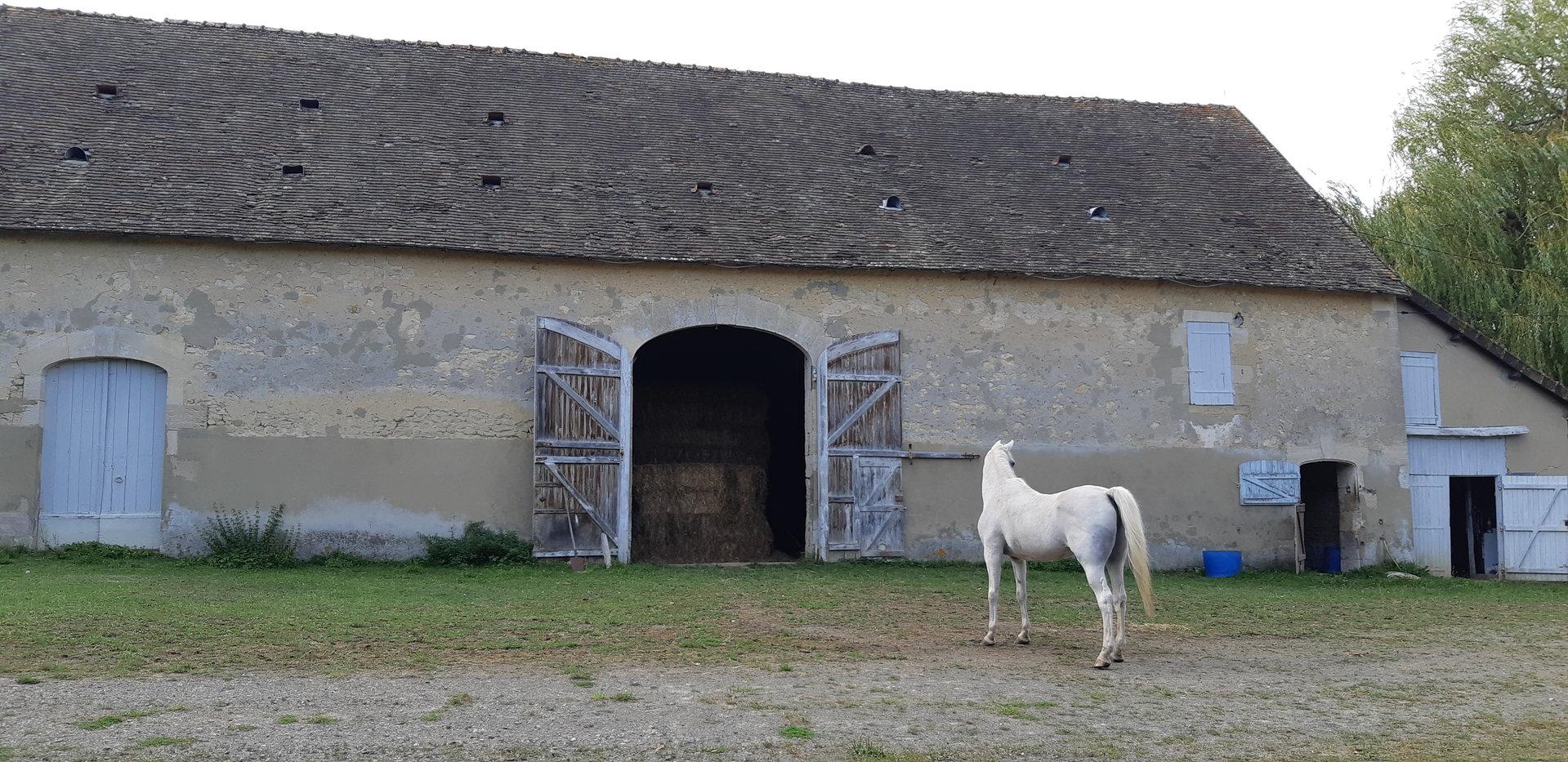 Propriété  aux portes du Perche de 186 m² avec 8,5 ha de prairie