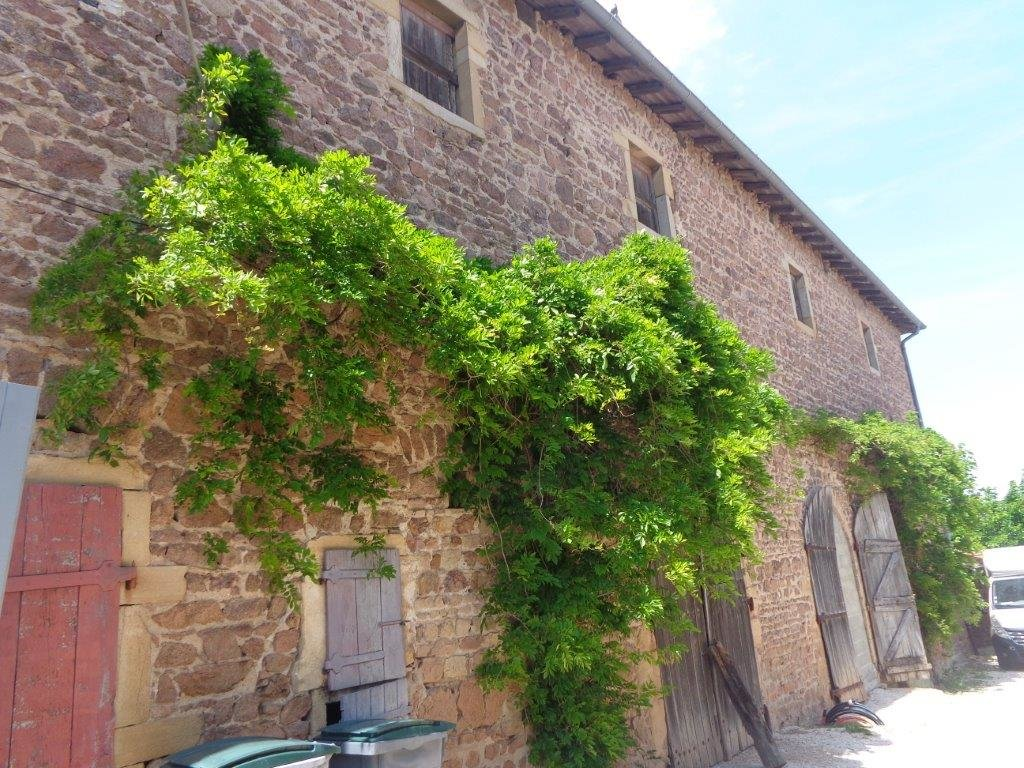 BEAUJOLAIS  Château avec vignes