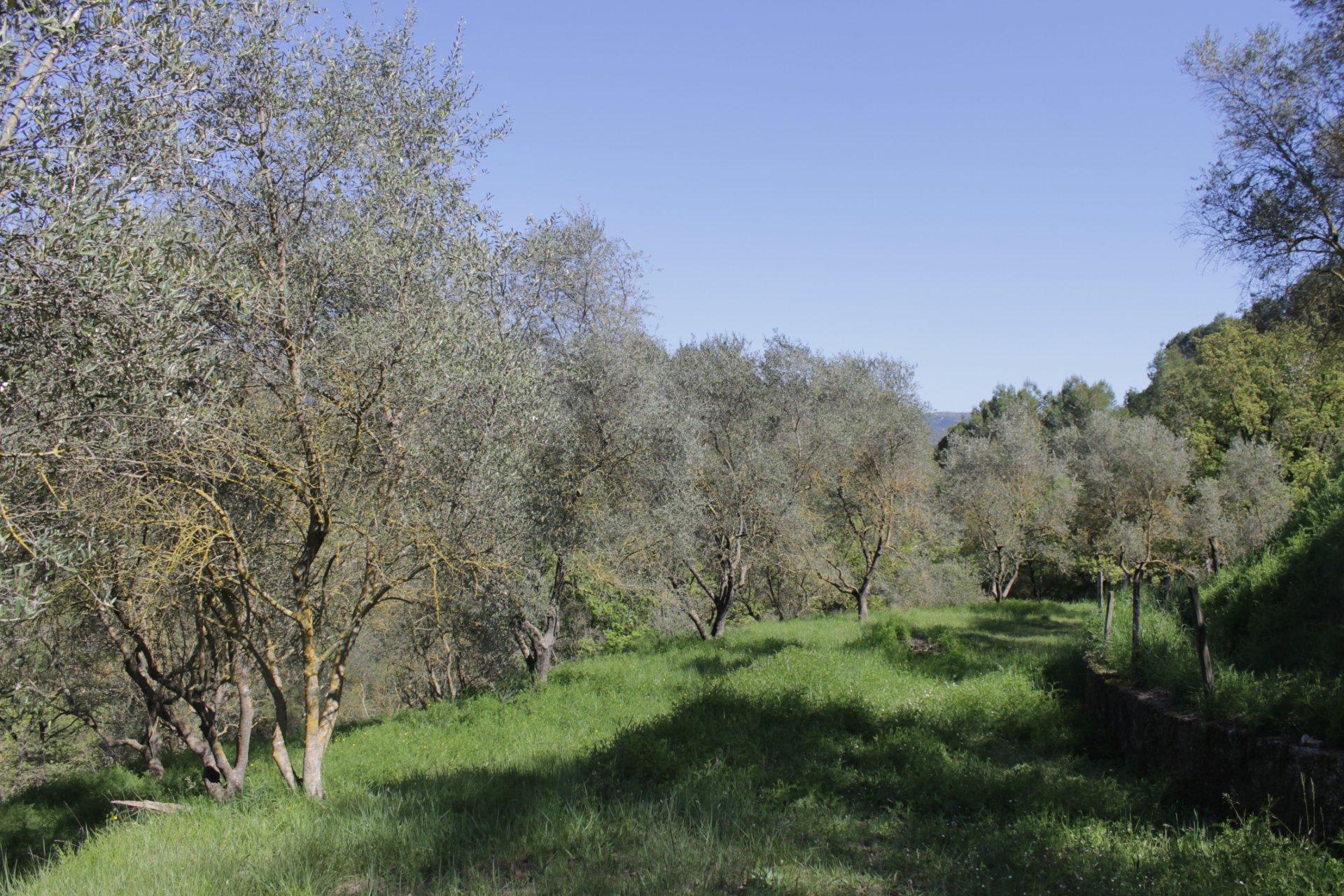 CONTES! Terrain agricole