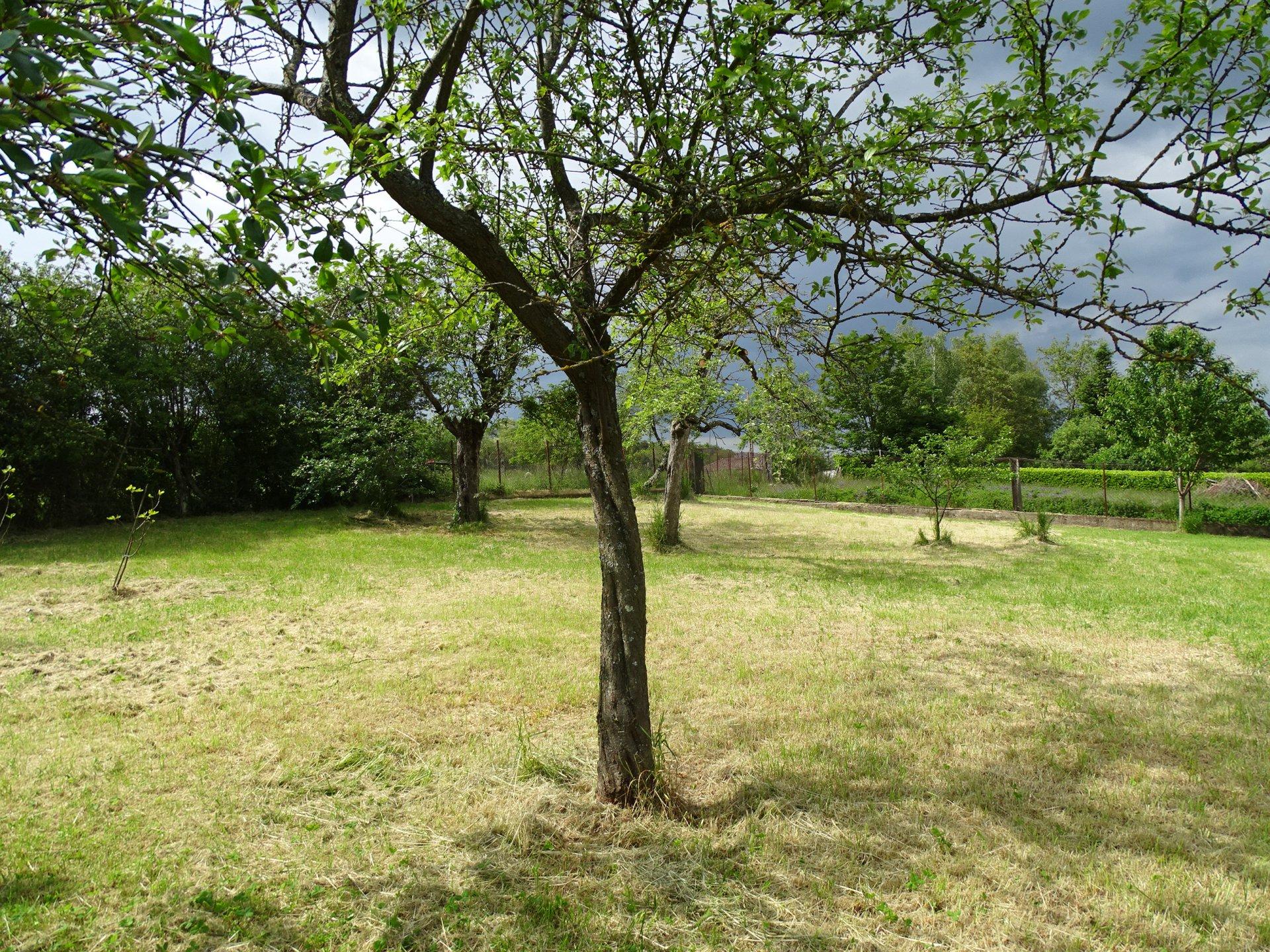 15 mn de Mâcon, dans le village de Blany (proche Hurigny), beau terrain constructible d'une surface de 1150 m².  Très bon environnement au calme et sans vis à vis.  Viabilisation en bordure et libre constructeur.  Honoraires à charge vendeurs