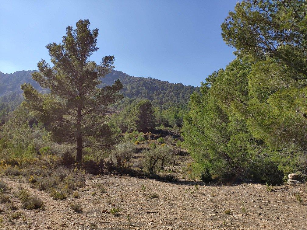 Parcelle d'oliviers avec un bon accès et une vue panoramique