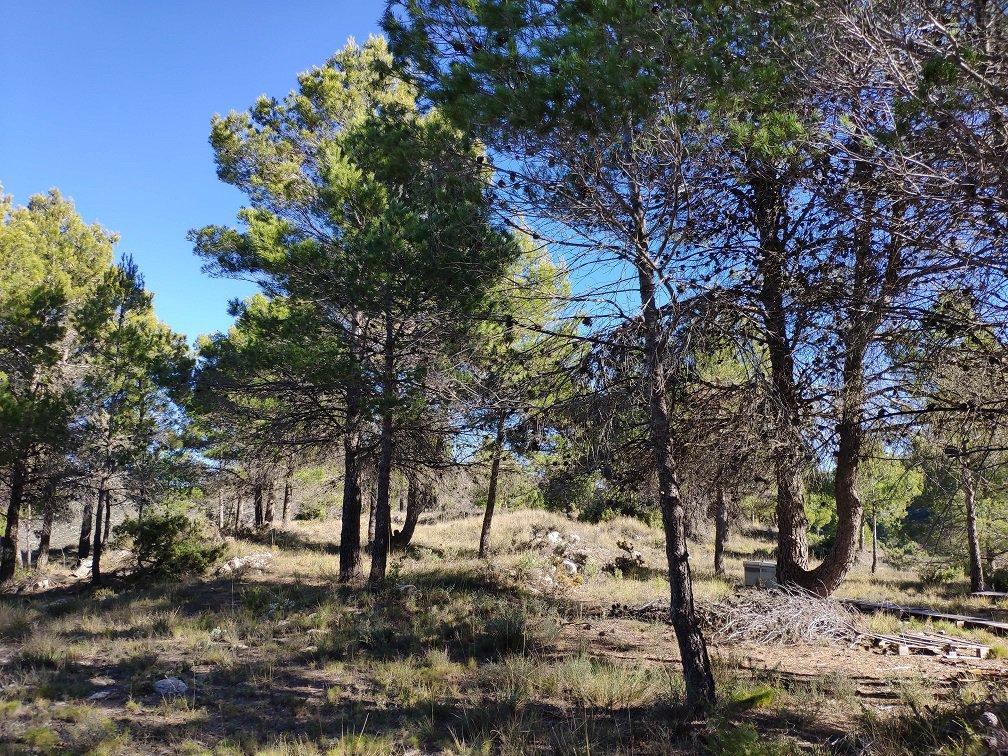 Parcela en la Sierra de Aitana