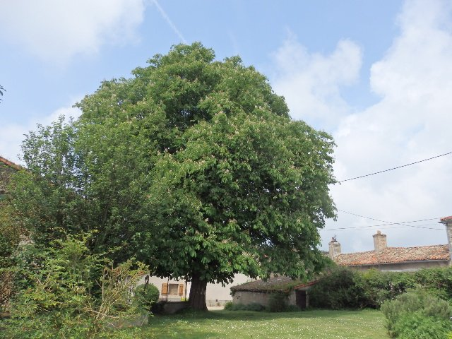 Spacious House with Garden - Vienne, Nouvelle Aquitaine