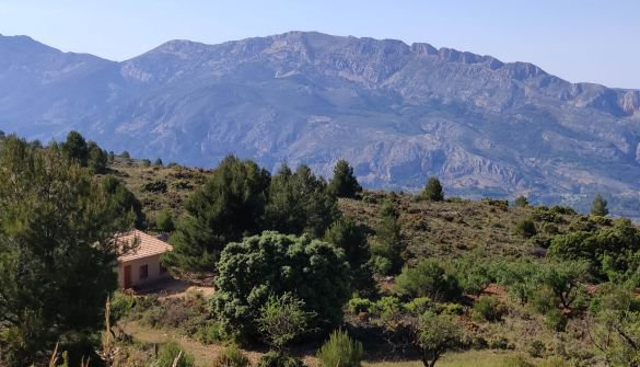 """73,000m2 """"Finca"""" with an agricultural warehouse and a ruin."""