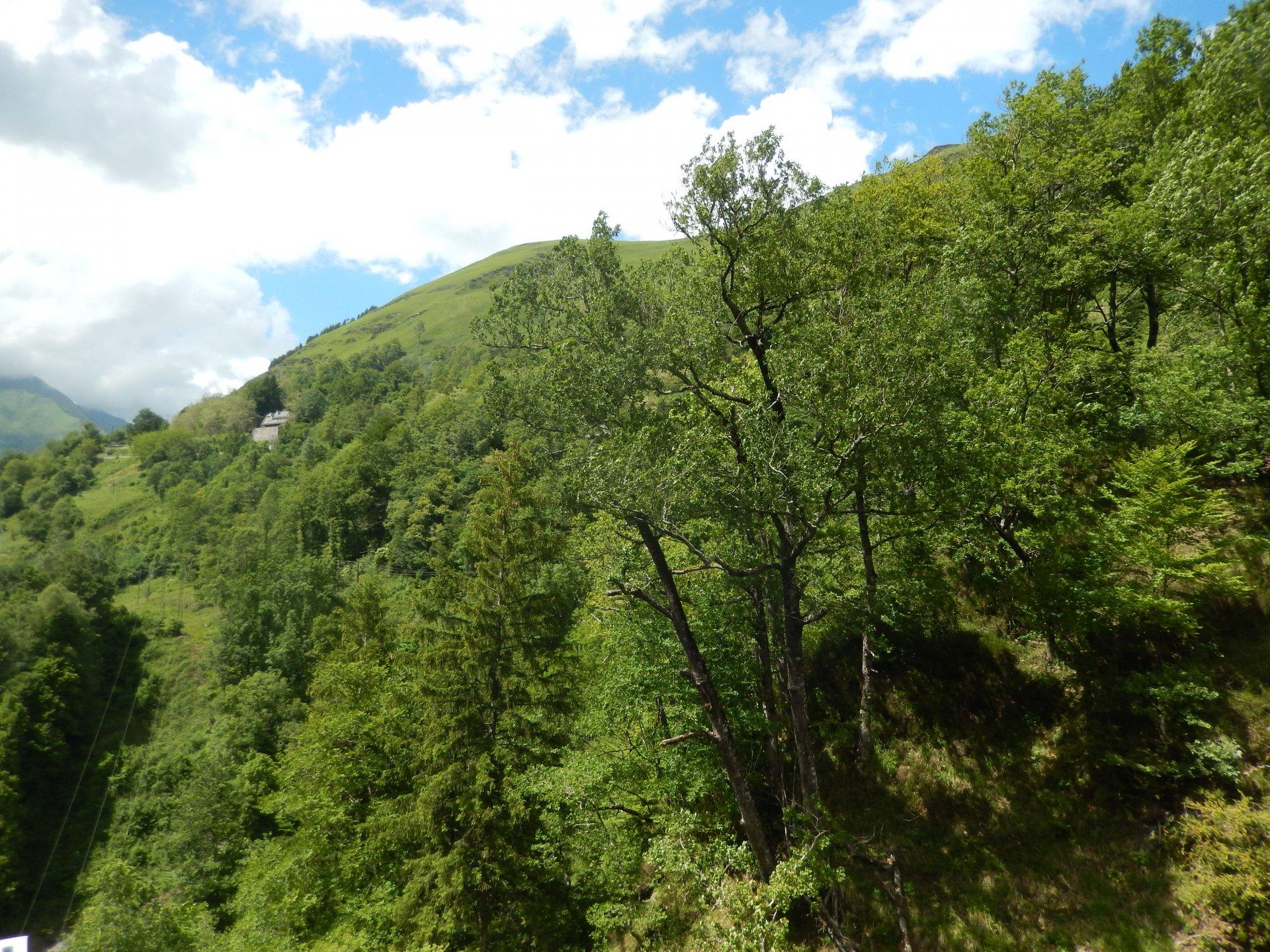 Vallée d'Ossau - Eaux-Bonnes