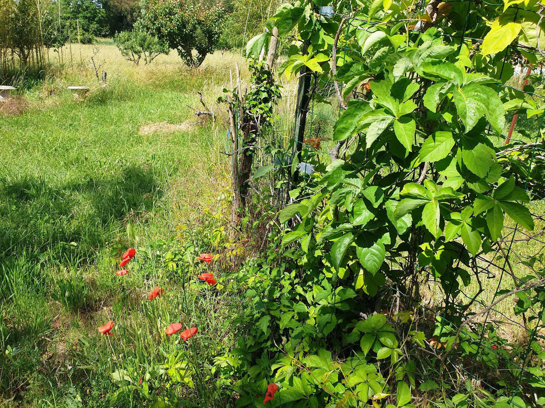 Bastidon in Provence  3808 m² of land